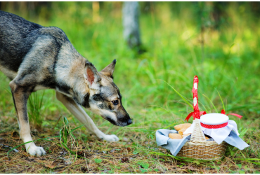 Foods for Dogs: Facts & Myths