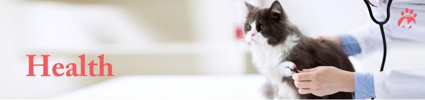 Cat_02_00