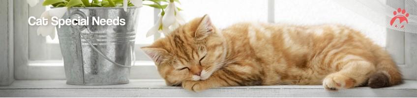 Cat_02_03