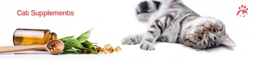 Cat_02_04