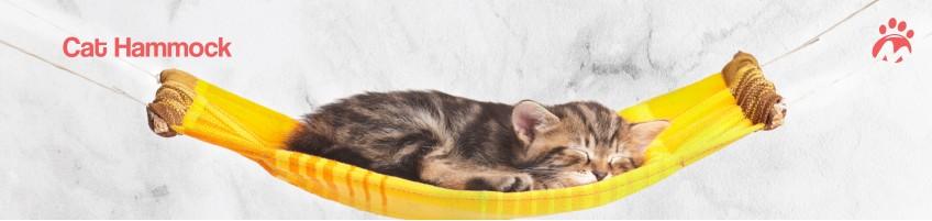 Cat_05_01
