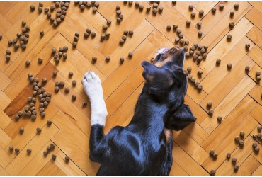 5 Things You Might Not Know About Pet Foods