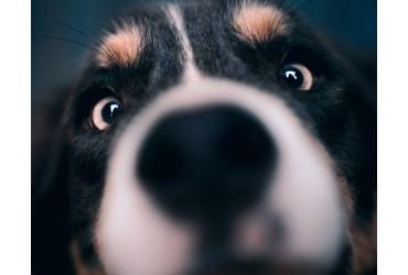 5 Weird Dog Behaviours Explained