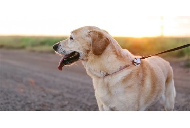 It's 'Walk Your Dog Month' In January: Here is How You Can Carry It Out Perfectly!