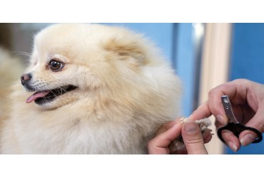 Perfecting The Art Of Pawdicure: How To Maintain Your Canine's Paws And Nails