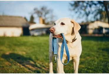 Collar VS Harness: Which Is Better?